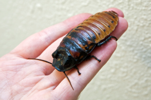 Giant Cockroach... WHY THE FUCK ARE YOU HOLDING IT!?!?!?!