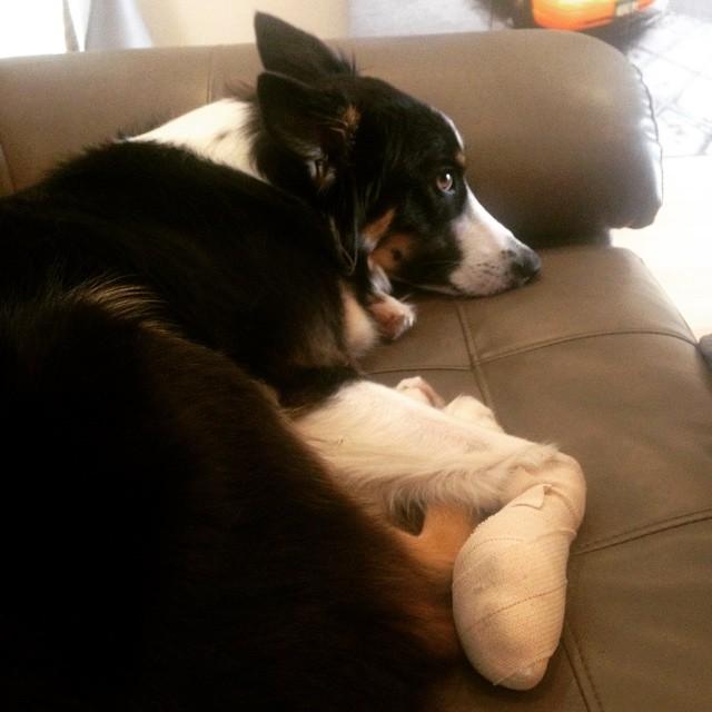 unhappy puppy