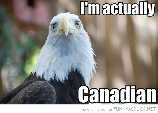 funny-sad-bald-eagle-actually-canadian-pics